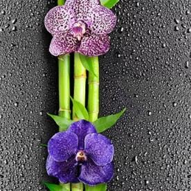 Панели ПВХ Европрофиль Орхидея темная, 2.5 м